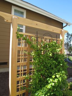 Trellis For Vines Privacy | Garden Adventures - for thumbs of all colors: Screening unwanted views ...