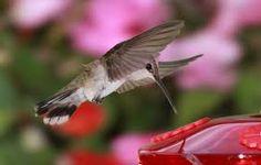 Resultado de imagen para amazing bird photography