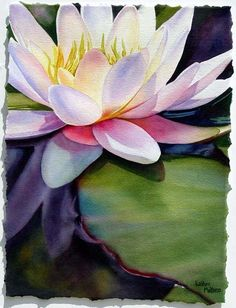 Esther Melton Watercolor, Floral Perfection - Water Lily