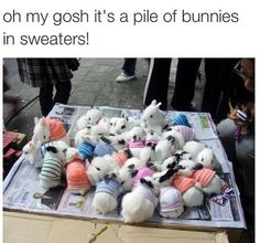 What is cuter than fluffy, baby bunnies? Baby bunnies in tiny sweaters! Baby Bunnies, Cute Bunny, Adorable Bunnies, Easter Bunny, Bunny Rabbits, Bunny Bunny, Easter Eggs, Cute Baby Animals, Funny Animals