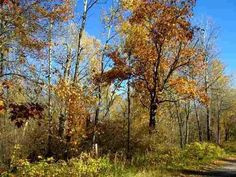#Bayfield County, Wisconsin Land for Sale; vacant lots, hunting acreage, waterfront lots, farmland and more... http://idxwi.thelandman.net/i/Bayfield_County_Wisconsin_Land_for_Sale