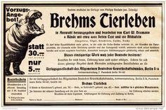 Original-Werbung/ Anzeige 1925 - BREHMS TIERLEBEN / MOTIV FLUSSPFERD - ca. 180 x 115 mm