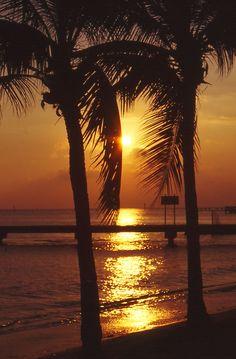 Key West Palm Sunset / By Heaven`s Gate (John)