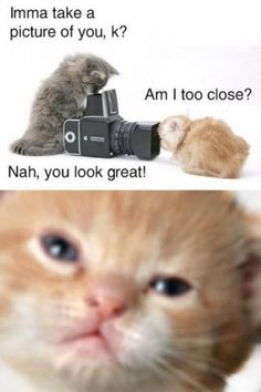 pictures of animals with captions | ... captions animals with captions funny pics with captions funny cat