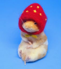 Taxidermy Hamster in Strawberry Hat Hamsters, Taxidermy, Ava, Cute Animals, Strawberry, Meme, Unique Jewelry, Handmade Gifts, Vintage