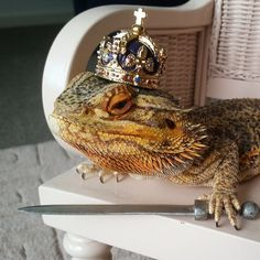 """With a name like """"bearded dragon,"""" it's hard to conjure up images of a friendly and adorable pet. But one look at Pringle (@super_pringle), a lovable lizard owned by 24-year-old Melbourne student Sophie Hayes, should be enough to change anyone's mind. """"Most people who hold or touch him for the first time are usually surprised at how soft he is,"""" Sophie says. """"I think many people don't see lizards as animals you can cuddle up to, but I love watching TV with Pringle curled up on my lap or…"""
