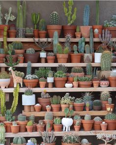 Succulents vs Cacti— Whats the Difference?Succulents vs Cacti— Whats the Difference?