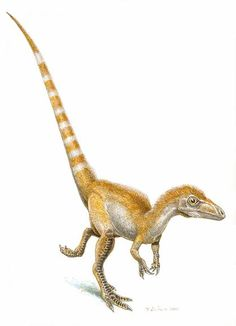 _Sinosauropteryx_ - the first fossil dinosaur to have scientifically established color. See link to the article, and also _Anchiornis huxleyi _the First full-body color rendering at http://news.nationalgeographic.com/news/2010/01/100127-dinosaurs-color-feathers-science/o/