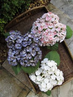 Sea Shell Flowers - Karen Robertson Collection