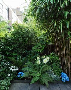 Urban Garden Design 14 Ideas to Make a Small Garden Look Bigger - Dreaming big, but limited by a lack of acreage? Here are 14 expert tips to help you live large in small yard. Small Garden Uk, Small Tropical Gardens, Small Front Gardens, Tropical Garden Design, Small Courtyard Gardens, Big Garden, Small Garden Design, Small Back Garden Ideas Uk, Small North Facing Garden Ideas