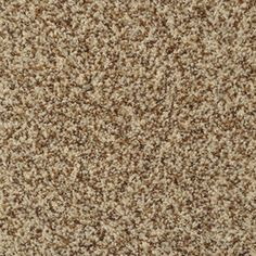 Stainmaster On Broadway French Toast Rectangular Indoor Tufted Area Rug (Common: 8 X 10; Actual: 96-Ft W X 120-Ft L)