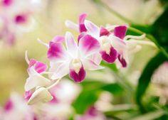 Hay tres mil variedades de Orquídeas en el Perú