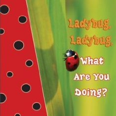 lady bug lady bug what are you doing?