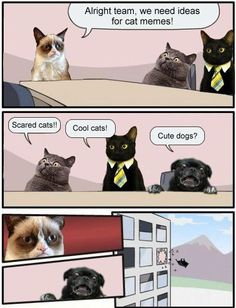 3432a54a070893253b71865813537f19 funny pics funny stuff pin by te'tum kintner on geekery pinterest grumpy cat and cat