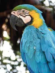 La Flora y Fauna del Ecuador: La flora y fauna de la sierra