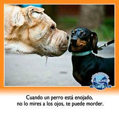 Cuando un #perro esta enojado, NO lo mires a los ojos, te puede morder
