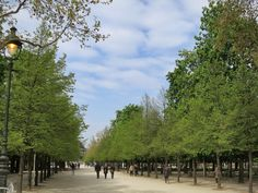 Tree-Lined-Pathway-Tuileries-Gardens-Paris-France.jpg