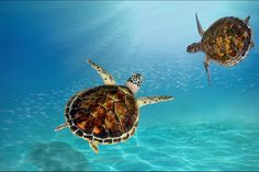 Go on a turtle tour at St Lucia, KZN Pet Turtle, Holiday Resort, To Go, Babies, Pets, Awesome, Animals, Babys, Animales