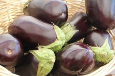 Growing Eggplants: How to grow eggplant successfully in the garden.