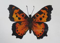 orange butterfly watercolor original painting