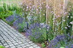 Lavender Hidcote, La
