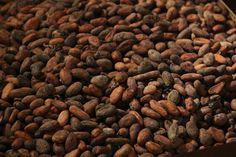 Οι κόκκοι κακάο είναι πλούσιες πηγές σιδήρου, χαλκού, μαγνησίου, ψευδαργύρου και φωσφόρου