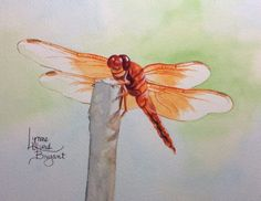 Dragonfly #11 for 2014 dragonfly calendar.
