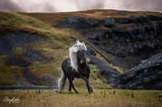 "3,046 gilla-markeringar, 40 kommentarer - Ann-Christin Vogler (@ponyliebe_fotografie) på Instagram: ""Missing Iceland """