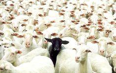 The black sheep ( literally)