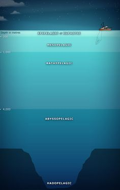 5 depth zones have been identified in the ocean. Life is most abundant in the uppermost 'euphotic' layer, where photosynthesis occurs. The mesopelagic is practically dark, and many creatures hide here during the day. The bathypelagic zone begins at Sea And Ocean, Ocean Deep, Deep Water, Deep Sea Creatures, Ocean Unit, Wale, Deep Blue Sea, Marine Biology, Shark Week