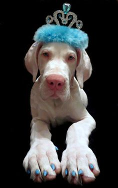 Cute #Dane #puppy ♡... Re-pin by StoneArtUSA.com ~ affordable custom pet memorials for everyone.