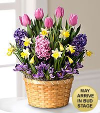 Ready to Bloom Spring Bulb Basket
