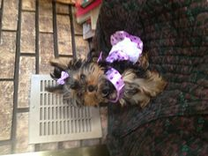 Bella in her new lilac outfit:)!