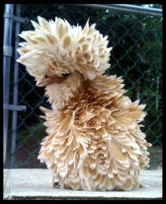 frizzle!