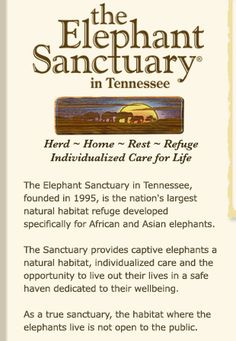 The Elephant Sanctuary : Hohenwald Tennessee Live elephant cams, great bios of individual elephants retired from entertainment venues http://www.elephants.com/index.php