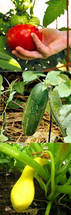 The Backyard Garden: Plants that help other plants grow