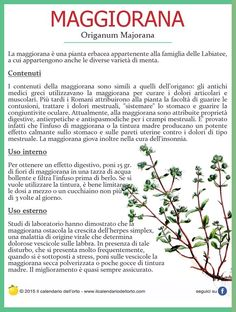 Il Calendario dell'Orto | Piante aromatiche Aromatic Herbs, Medicinal Plants, Natural Life, Natural Health, Magic Herbs, In Natura, Keto Nutrition, Green Life, Herbal Medicine