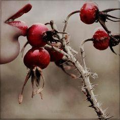 cherry red lips <3