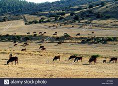 Camel, Stock Photos, Mountains, Nature, Animals, Naturaleza, Animales, Animaux, Camels