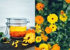 Calendula oil - great for treating dry skin - Evelinas Ekologiska Homemade Skin Care, Diy Skin Care, Homemade Beauty, Diy Beauty, Willow Garden, Beauty And The Beat, Calendula Oil, Diy Spa, Skin Care Remedies