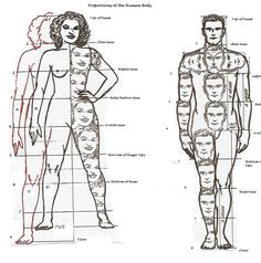 Human Body Proportions For Artists