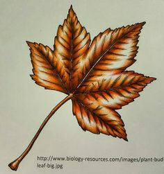 Coloring Tips, Leaf Coloring, Coloring Books, Adult Coloring, Colored Pencil Tutorial, Colored Pencil Techniques, Colorful Drawings, Colorful Pictures, Johanna Basford Secret Garden