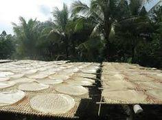 De foto geeft weer hoe de reist noedels wordt gedroogd. De rijst noedels wordt drie dagen gedroogd.