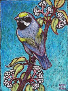 """9x12 Original Bird Painting - Oil Pastels- """"Golden Winged Warbler Male"""" - Not a Print - bird art"""