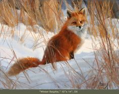Oil painting of a red fox - The Artwork of Edward Aldrich: North American Wildlife Paintings