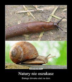 Best Memes, Funny Memes, Jokes, Hahaha Hahaha, Polish Memes, Scary Funny, Smile Everyday, Humor, Animales