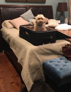 She knows what's going down when the suitcases come out & will not be left without her humans yet another time.