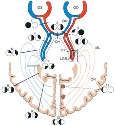 The entire neuro chapter from page 318 to 363 in one long scroll! Cool! Tasman W., Jaeger E.A Wills Eye Hospital Atlas of Clinical Ophthalmology / 9 - Neuro-ophthalmology