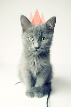 I would even think about getting this cat... Idk why just a cutie!