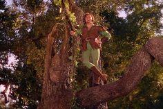 Errol Flynn - Robin Hood